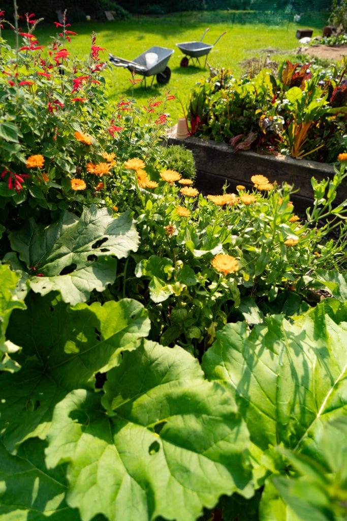 an abundant kitchen garden at The George in sunny Alstonefield, Peak District, Derbyshire